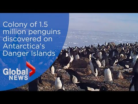 Penguin Mega-Colonies 17 Nights at the South Pole   One